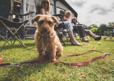 Red Shoot Dog Camper