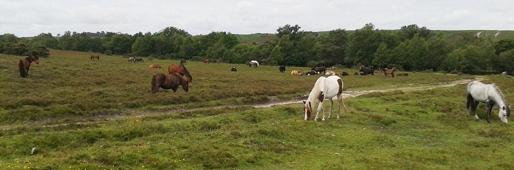 Could New Forest Ponies be coated with glow in the dark paint?