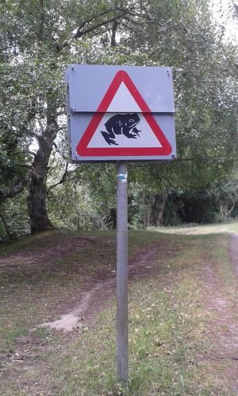 Plea to drivers as toads cross roads to reach breeding ground