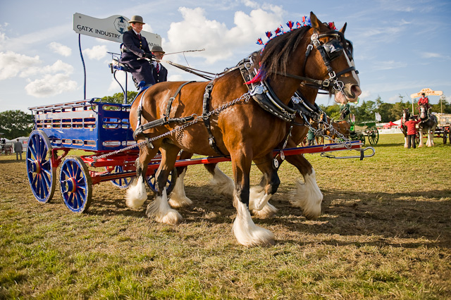 What to expect at this year's New Forest Show