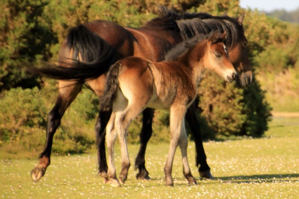 Motorists urged to stay vigilant for foals in the forest