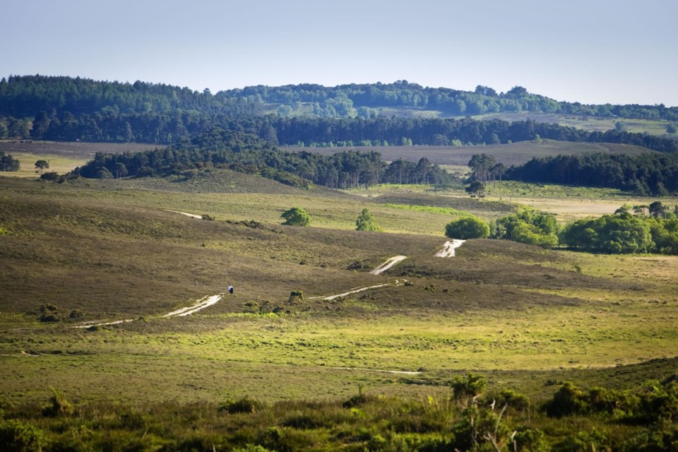 5 Reasons to go Family Camping in the New Forest