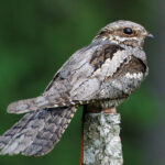 Public urged to help New Forest's rare birds survive